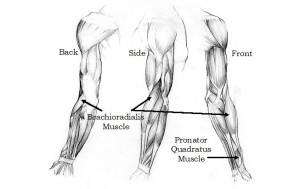 Left Forearm