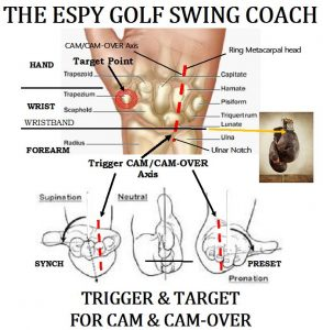 Trigger Muscle to set the Dual Cam Action Golf Swing