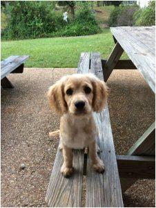 01-sebastain-puppy