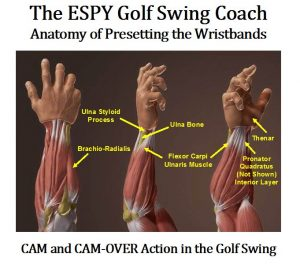 The Fourhorsemen of Golf Key Muscles