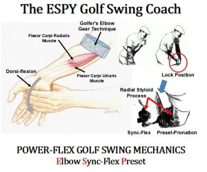 Elbow Flex Forearm Muscles