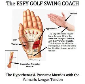 Hypothenar is the pad just above the pink finger.