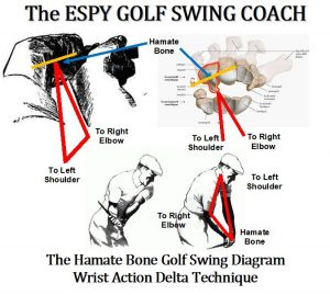 In the diagram above, the golfer can see how the Sync/Preset forms the Delta Technique, using the wrist action in the golf swing. The Hook on the left Hamate Bone is synchronized with the golfer's right elbow. Presetting the wrist action in the golf swing, the golfer can engage a powerful component in their golf swing, elbow and their subconscious mind.