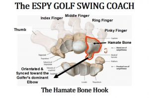 Just like in golf, your lead wrist is a key factor. If you are going to fracture or break a bone in your wrists it will be to the Hamate bone. The reason is the hook that protrudes Some golf coaches state that the trail wrist and forearm is just along for the ride, Warren Morris injury proves this.