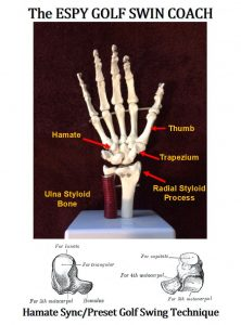 In my conversation with Warren Morris, I explained the theory of the ESPY Golf Swing technique that the Hamate bone was the key wrist bone in the golf swing. In the Figure below showing the skeletal model of the human hand, I labeled three of the eight tiny bones in the wrist. Two of these bones are quintessential in setting the Sync/Preset golf swing technique to the Lock Position.