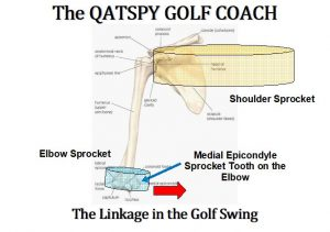 The golfer wants to sync, or cam-over, the Hamate bone to set the inside part of the right elbow called the Medial Epicondyle, shown above. There's a hook on the Hamate bone that I use to sync with the Epicondyle. This allows the Humerus Bone in the arm (upper arm) to act like a camshaft to connect the elbow sprocket with the shoulder sprocket, in the first Figure.