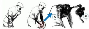 The wrist action in golf swing